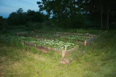 Low ribbon around the raised beds to discourage deer