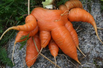 Monster Carrot
